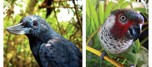 Luckybirds