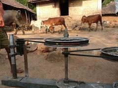 Cow_power