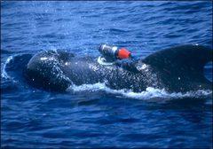 Whalepostcard